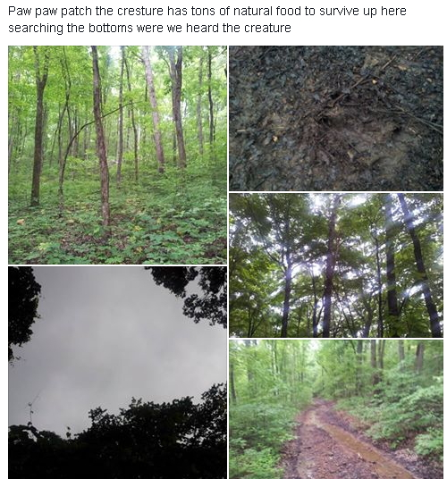 Bigfoot Sightings in Arkansas