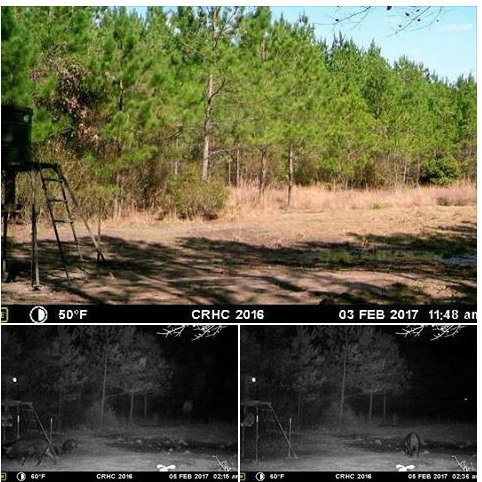 winter 2017 new bigfoot sightings bigfoot encounters