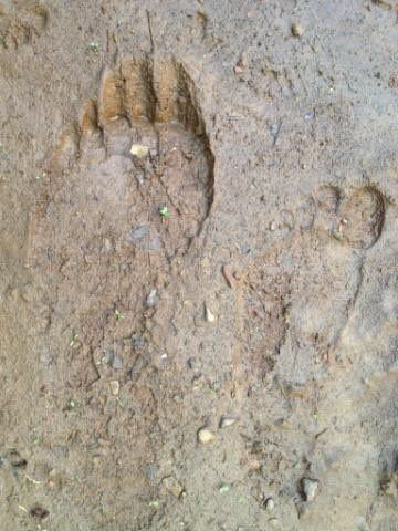 search for Bigfoot news