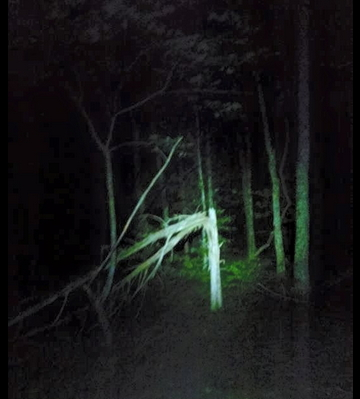 Finding bigfoot Arkansas