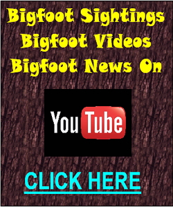 bigfoot sightings news